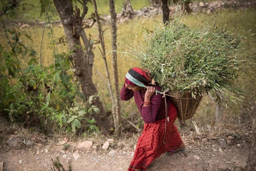 Frau in der Himalaja-Region trägt einen Korb auf ihrem Rücken