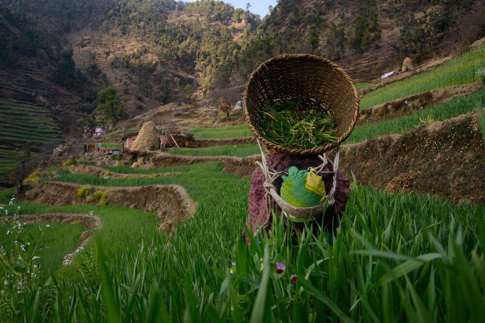 Reisfelder in der Himalaja-Region