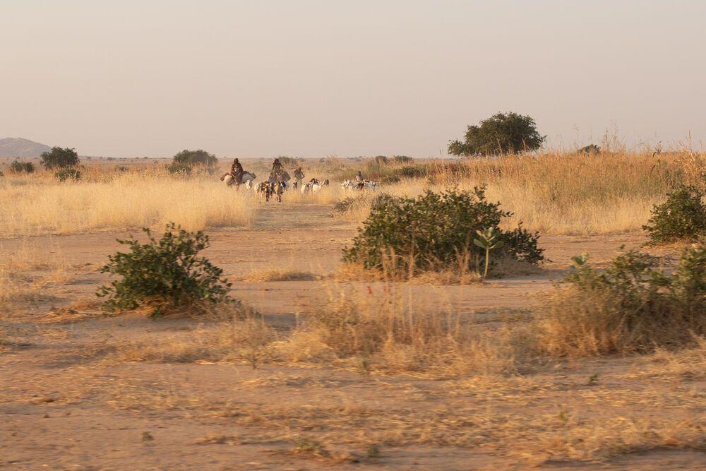 Dürre Buschlandschaft in Nordafrika