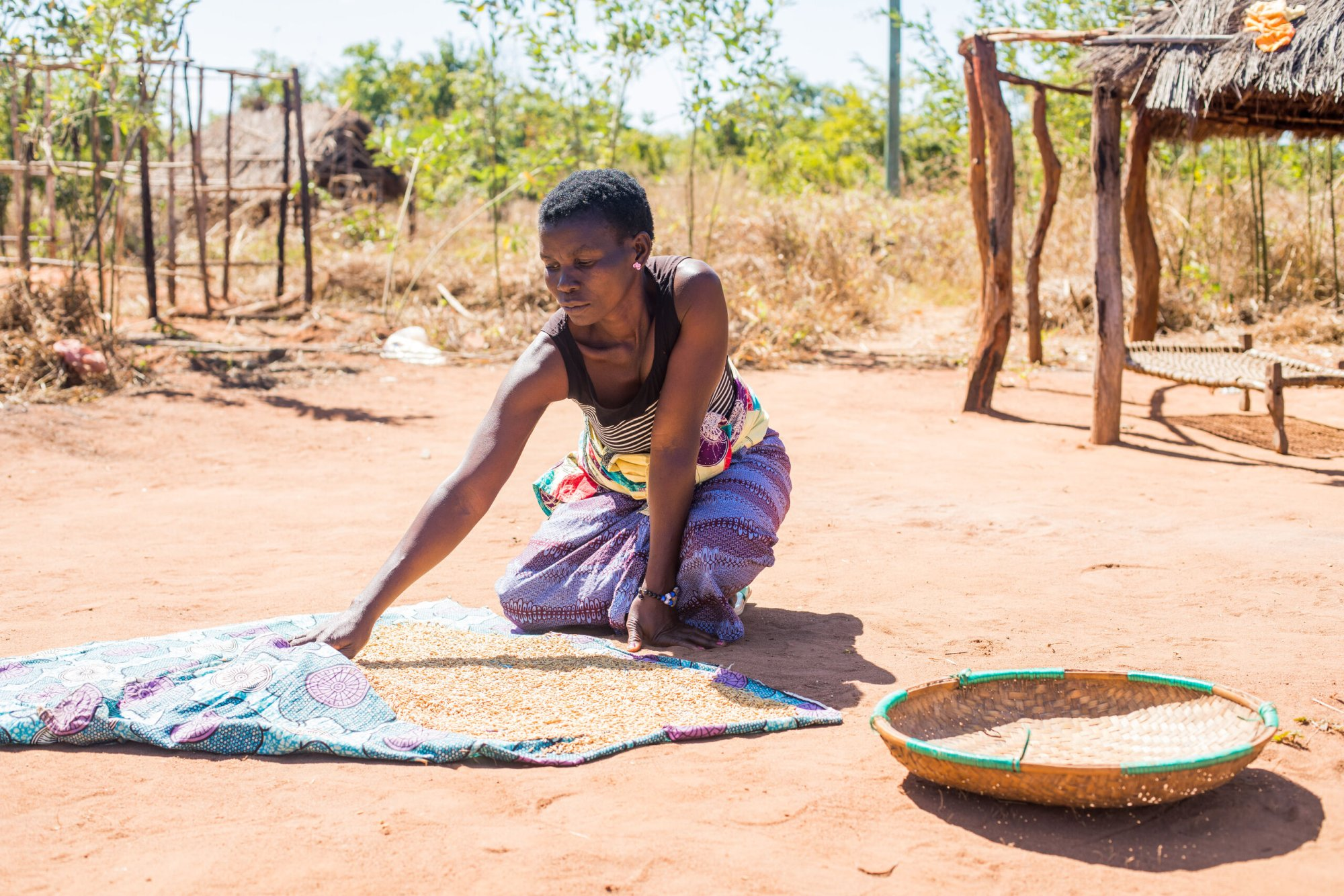 Mozambique: A woman spreads out rice to dry outside of her home in northern Mozambique. More Info