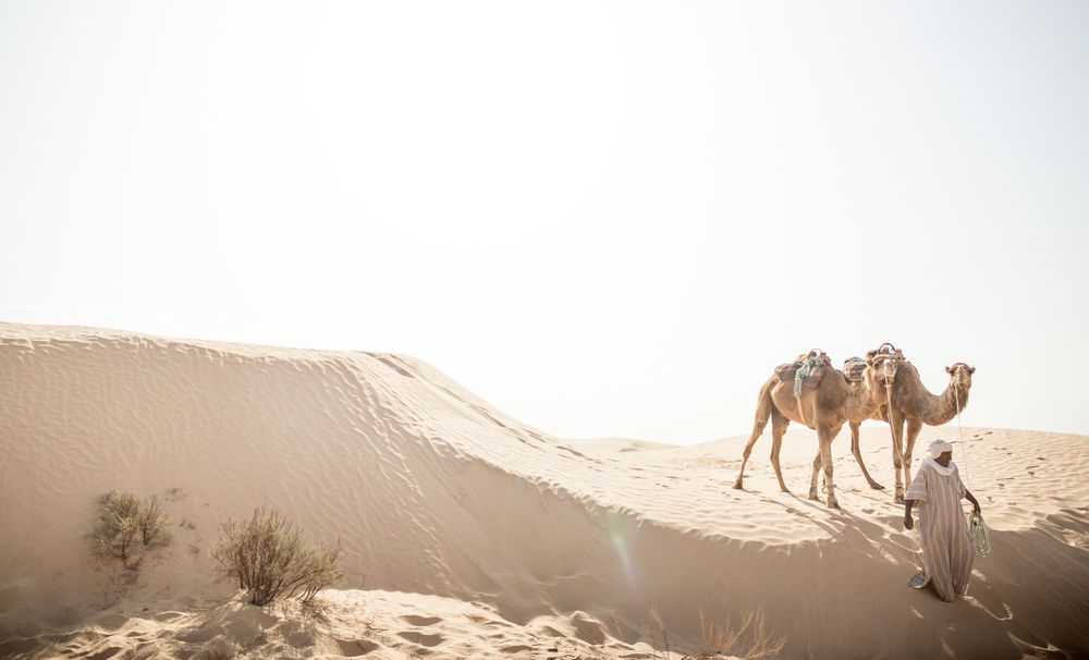 Arabian Peninsula: Welcome to North Africa!  Photo by Justin Lovett More Info