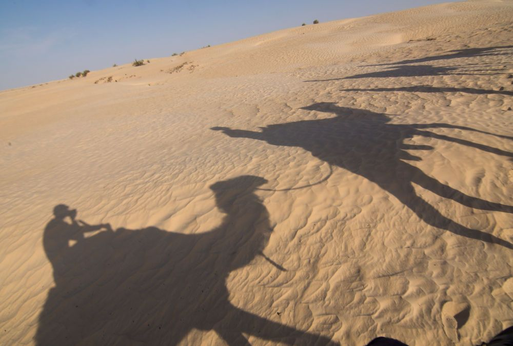 Near East: The interns trek through the desert sands on camels in North Africa.  Photo by Andrew W. More Info