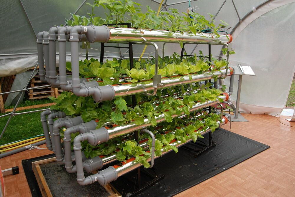 International: Global Food Garden vegetables grow with the hydroponic stystem where the plants root in an inorganic sbstratum baskets standing in pipes. More Info