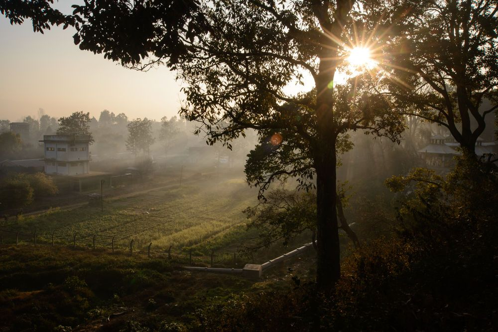 Nepal is full of a natural beauty that is easy to photograph, such as this tree and the early morning sun.
