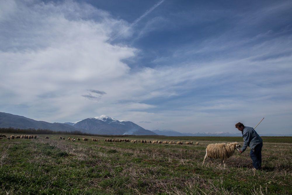 Eastern European shepherd; a reflection of the biblical description of Jesus as the Good Shepherd who cares for His sheep.