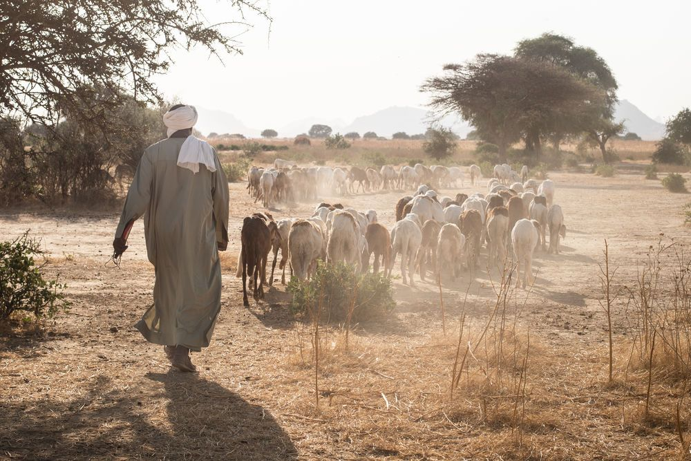 Africa: Shepherd with his flock in central north Africa. Photo by Rebecca Rempel More Info
