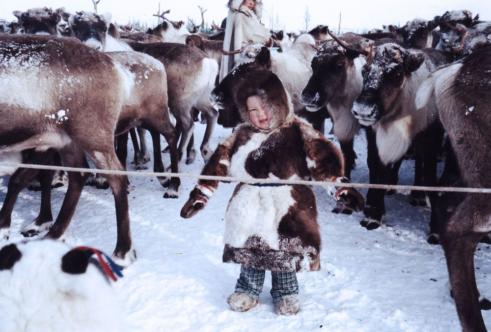 Nenets child among reindeer in Arctic Russia. The Nenets are indigenous reindeer herders; for many, reindeer are their life, their source of food, clothes, transport and shelter.