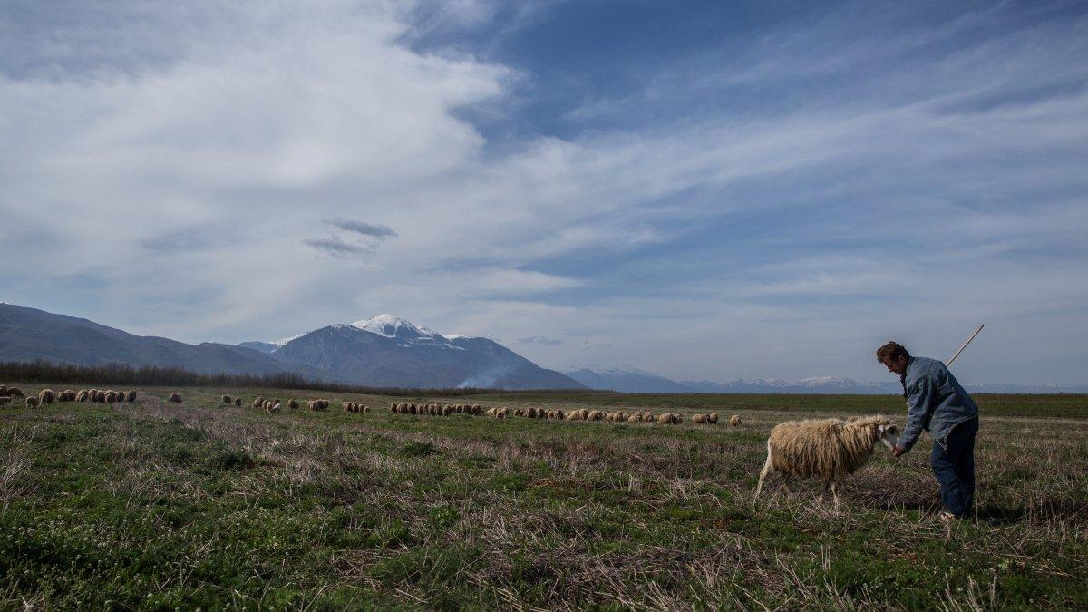 Eastern European shepherd