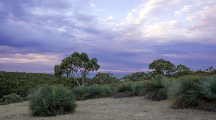 Australia: Australian outback More Info