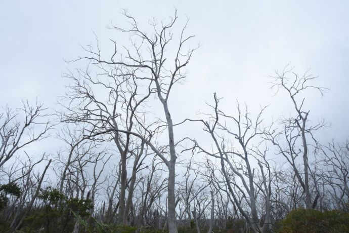 Australia: Dead trees make for a forlorn landscape along the coast of Australia. More Info