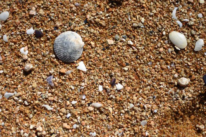 New Zealand: A close up on a New Zealand beach. More Info