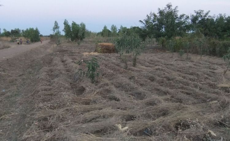 Malawi: Demonstration plot for Foundation for Farming More Info
