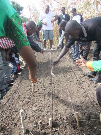 Malawi: Demonstration of vegetable nursery for Foundation for Farming More Info
