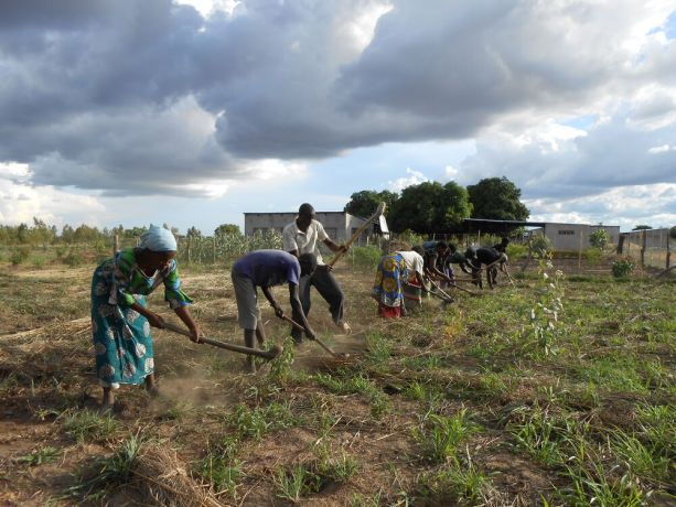 Malawi: Foundation for Farming Training, preparing field for planting maize in Gods Way of Farming method More Info