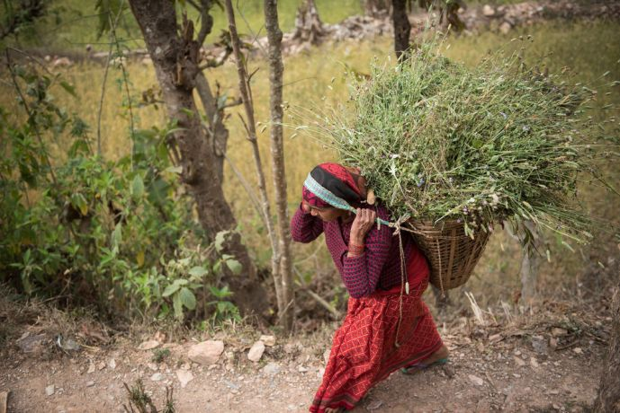 South Asia: A Nepali woman carrying product from her farm. More Info