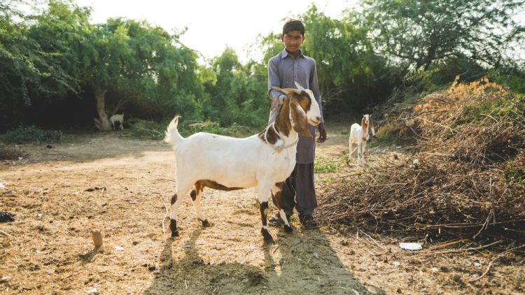 Pakistan: A boy with goat in Pakistan Photo by Justin Lovett More Info
