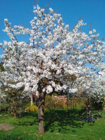 Czech Republic: South Bohemia in spring, CZ. Czech Republic More Info