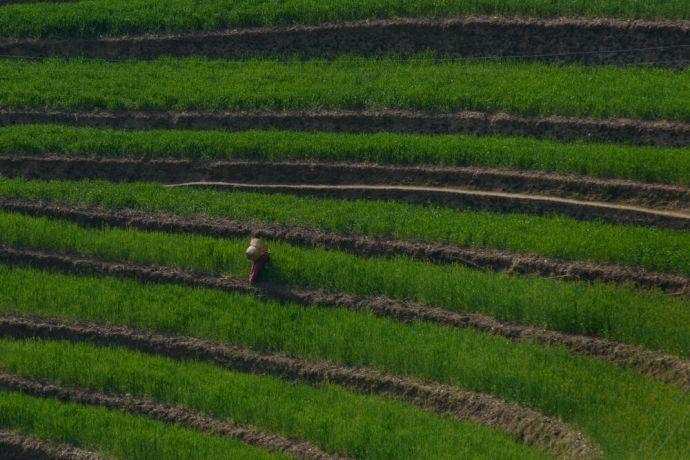 Nepal: Women working in terraced rice fields in Nepal. More Info