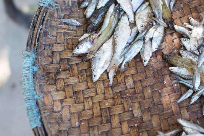 Mozambique: Fish for sale along the street in Northern Mozambique. More Info