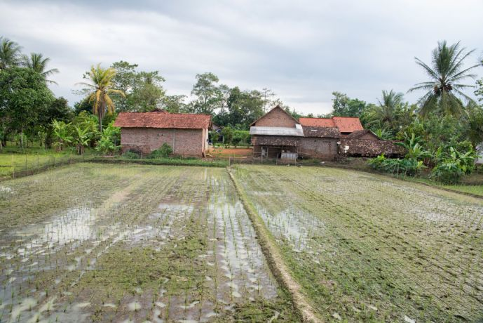 Indonesia: A farm in Indonesia, they tend to be small as the work is largely done by hand. More Info
