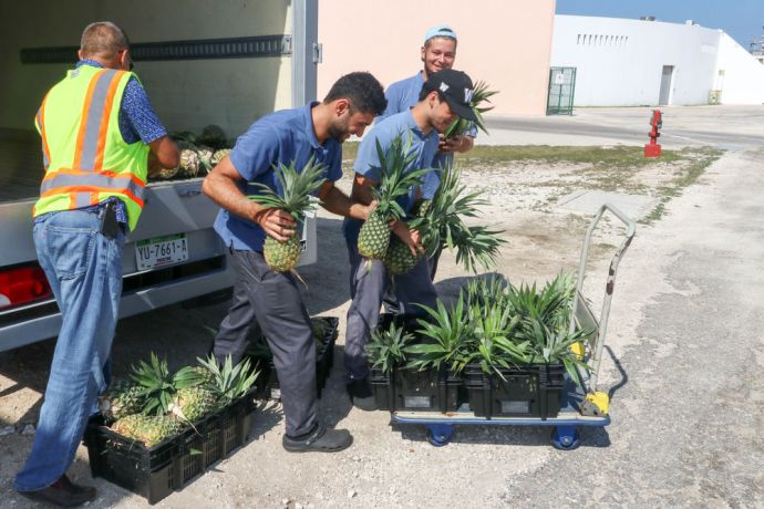 Mexico: Progreso, Mexico :: Crewmembers unload fresh fruit from a van. More Info