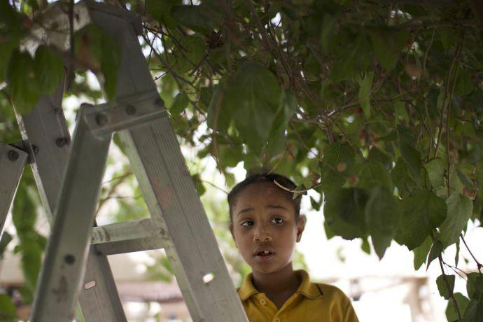 Arabian Peninsula: Young girl picks fruit in the Arabian Peninsula.  Photo by Kathryn Berry More Info