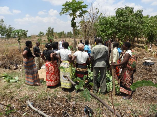 Malawi: Foundations for Farming - learning by doing, building compost piles More Info