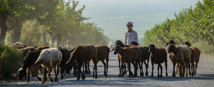 Central Asia: A young boy herds his families sheep in Central Asia.  Photo by Garrett N More Info