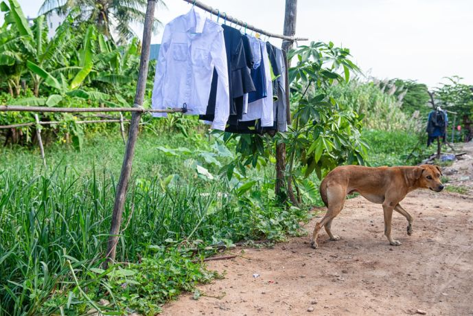 Cambodia: Clothes hanging out to dry while a camera shy dog walks away. More Info