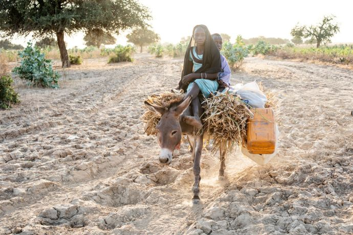 Africa: A girl rides a donkey home from the market in central north Africa. Photo by Rebecca Rempel More Info