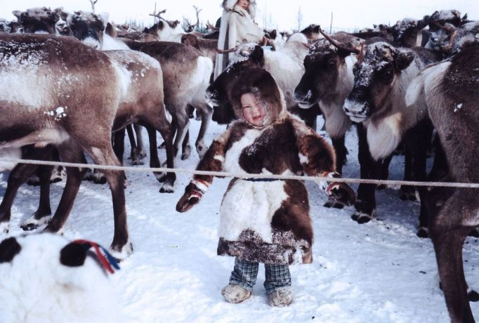 International: Nenets child among reindeer in Arctic Russia. The Nenets are indigenous reindeer herders; for many, reindeer are their life, their source of food, clothes, transport and shelter. More Info