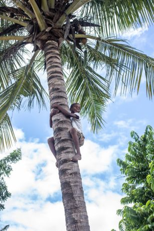 Mozambique: A boy climbs up a coconut tree in Mozambique. Photo by Rebecca Rempel More Info