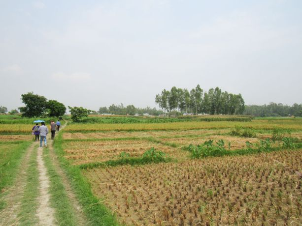 Bangladesh: Bangladesh :: A group of people walk through a field. More Info