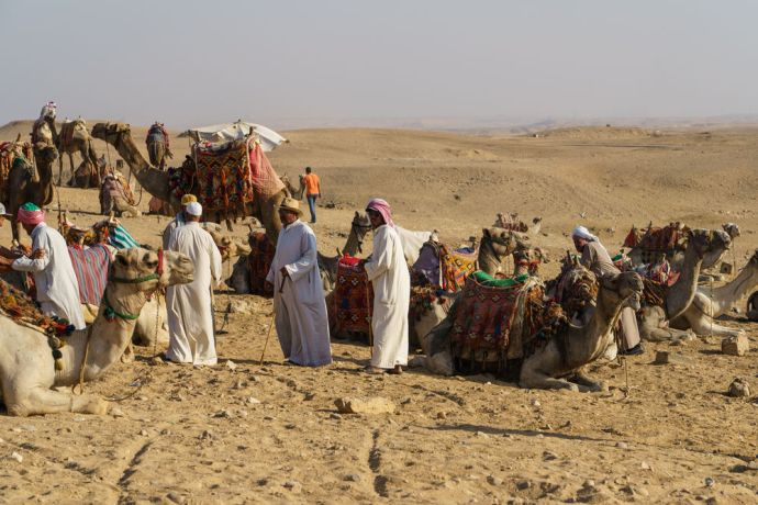 North Africa: Camels rest before traveling through the desert.  Image by Garrett N More Info
