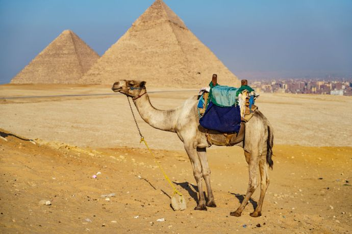 North Africa: Egyptian culture and came at the pyramids.  Image by Garrett N More Info