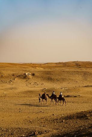 North Africa: North African camels travel the desert.  Image by Garrett N More Info