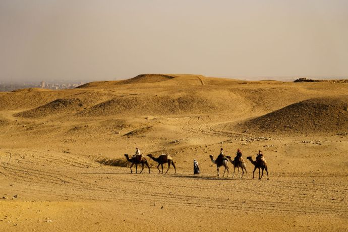 North Africa: North African camels travel through the desert.  Image by Garrett N More Info