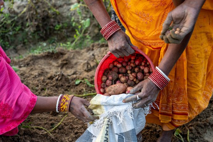 South Asia: A family collects potatoes in South Asia. Photo by Rebecca Rempel. More Info