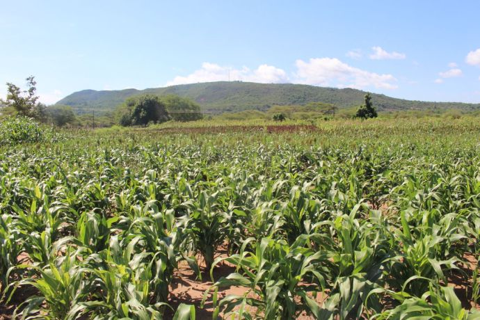 Zimbabwe: Applying Foundations for Farming principles yields abundant crops for Margaret. Although villagers initially ridiculed her, they were amazed at the final results. More Info