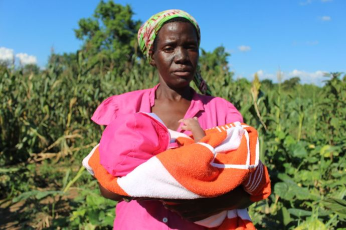 Zimbabwe: Working in the blazing heat of the Zambezi valley is not for the faint-hearted. But one heavily pregnant woman defied the odds by applying Foundations for Farming principles. This prevented the spread of hunger in her household that was threatening her and her other five children. More Info