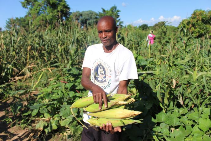 Zimbabwe: At first sceptical of the success of applying the farming principles, Stellas husband shows off maize cobs from their own field. More Info