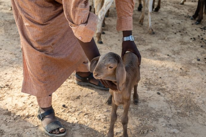 Africa: Man holding a goat in north-central Africa. Photo by Rebecca  R. More Info