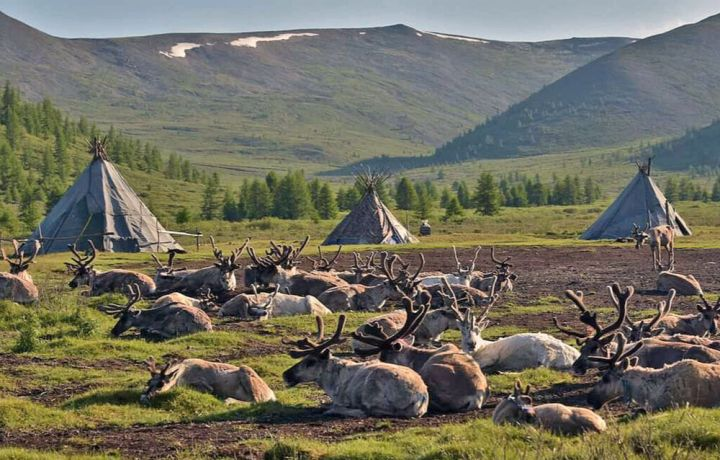 Mongolia: View to the nomadic Tsaatan reindeer herders camp in a remote valley in Mongolia. Photo by Buyana. More Info