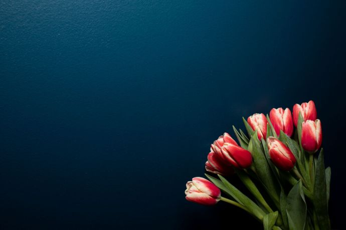 International: Flowers against a blue wall. Photo by Rebecca Rempel. More Info