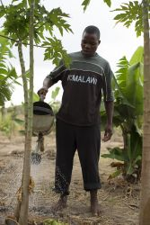 A national worker waters trees at the OM Malawi base.