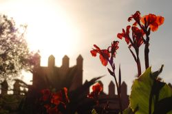 Red flowers in the sunlight, reflect the Creator. Photo by Raquel White