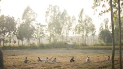 Locals work among the fields under the hot sun.