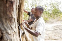 OM workers Shadrick (front) and Francis help build a thatched structure in Ntaja, Malawi.