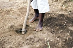 A man works in the field in Mozambique.