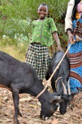 A Yao student at Chiyembekezo school in Ntaja shows off the goat she received from OM Malawi